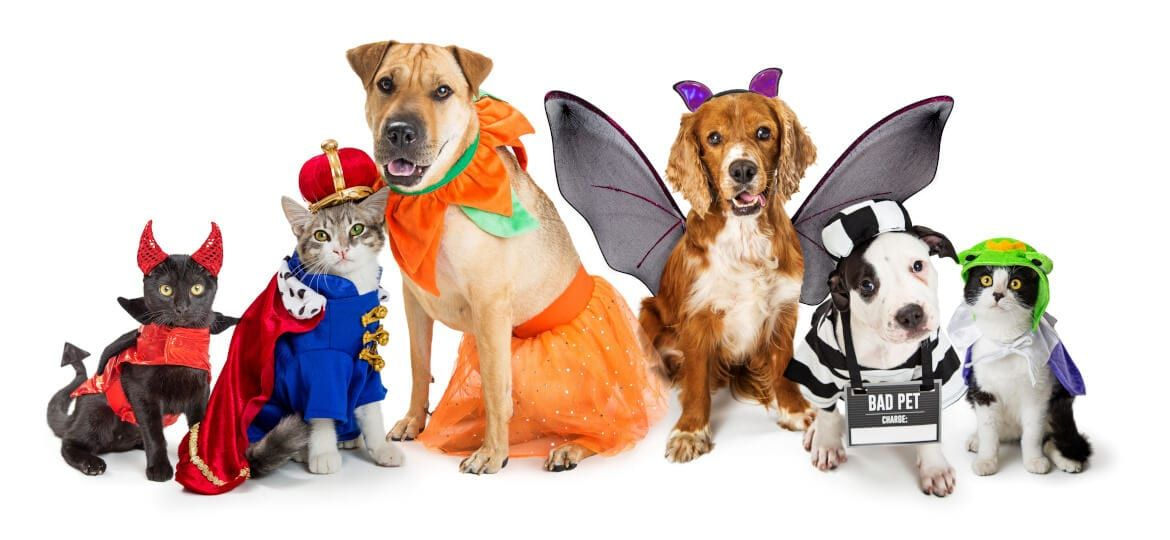 Dogs and cats sitting side by side dressed up in cute Halloween costumes with white background